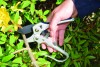 6258RS Razorsharp Compact Ratchet Anvil Secateurs