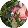 Razorsharp ADVANTAGE Bypass Secateurs